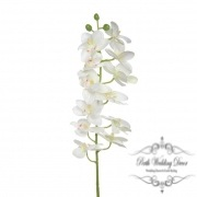 Butterfly Orchid Phalaenopsis White (56cmH)
