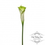 Calla Lily Early Bloom Stem (60cmST) Real Touch Green