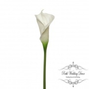 Calla Lily Early Bloom Stem (60cmST) Real Touch White