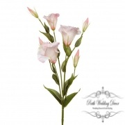 Lisianthus Spray (78cmST) Light Pink