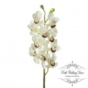 Orchid Cymbidium 10 Heads Cream (90cmH)