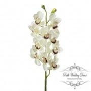 Orchid Cymbidium 10 Heads Cream (90cmH)