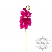 Orchid Phalaenopsis Hot Pink (75cmH)