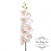 Orchid Phalaenopsis Melba 9Flw (96cmST) R.Touch White