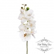Orchid Phalaenopsis White (75cmH)
