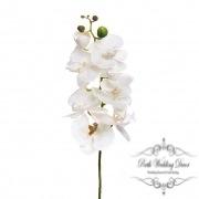Orchid Phalaenopsis White (75cmH)