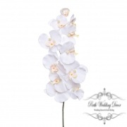 Orchid Phalaenopsis White (90cmH)