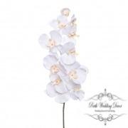 Orchid Phalaenopsis White (90cmH)