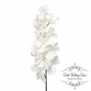 Orchid Vanda Tropez Giant 12Flw (120cmST) R.Touch White