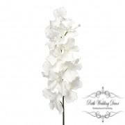 Orchid Vanda Tropez Giant 12Flw (120cmST) R.Touch White