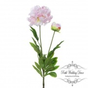 Peony Alison with Bud (88cmST) Cream Pink