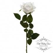 Short Stem Sonia Rose White (30cmH)