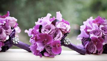 purple 109